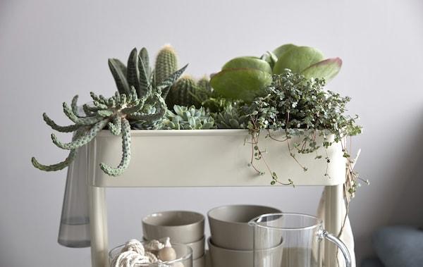 特写:RÅSKOG 拉斯克 手推车可充当室内花园,上面摆满仙人掌和多肉植物。