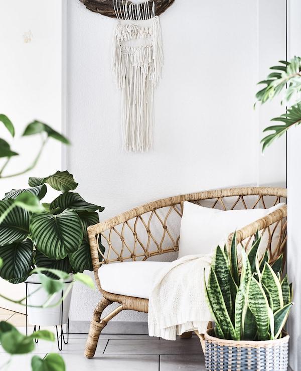 藤椅的四周满是盆栽植物。