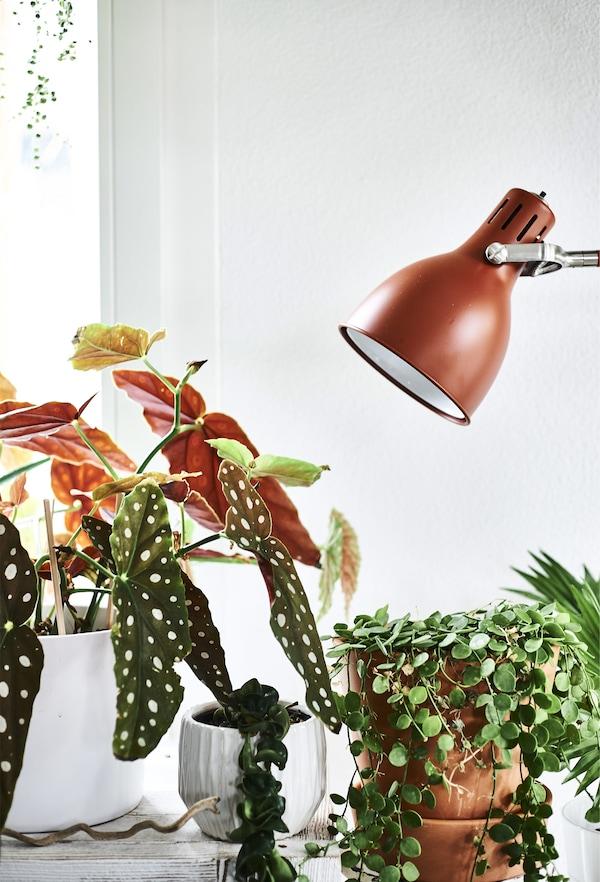 铁锈红色的灯具和盆栽植物。