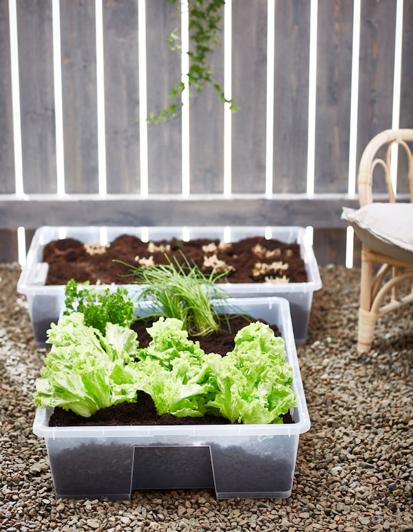 Two plastic SAMLA boxes are used as planters to grow edible plants like lettuce and chives.