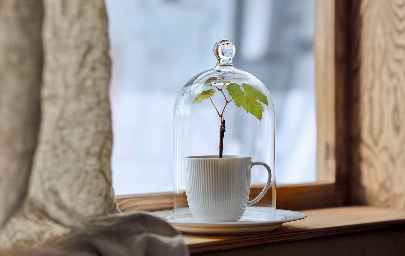 狭窄的窗台上摆放着一只种着微型植物的茶杯,茶杯上方罩着 MORGONTIDIG 穆隆提迪 玻璃罩,后面是冬日景色。