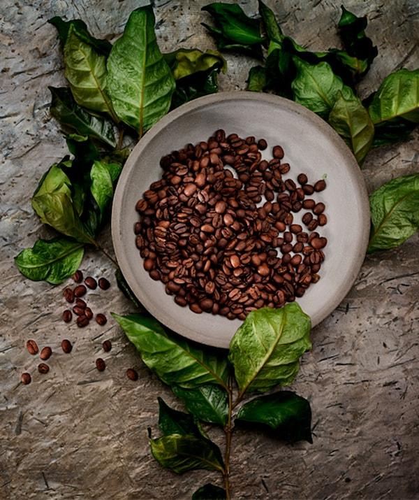 哑光灰的陶瓷盘里装着烘烤过的完整咖啡豆。将碗放在带有半干树叶的细枝上。