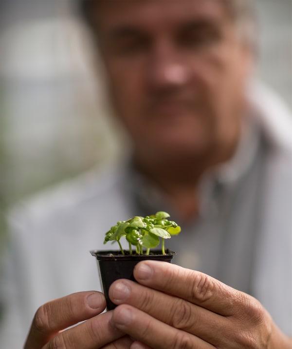 一双手将一只小巧的方形塑料花盆捧到镜头前,里面的植物刚萌出幼小的嫩芽,它的主人正站在相机焦点之外。
