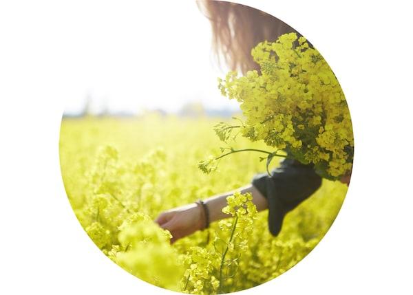 一位女士正在阳光明媚的田野上采花。