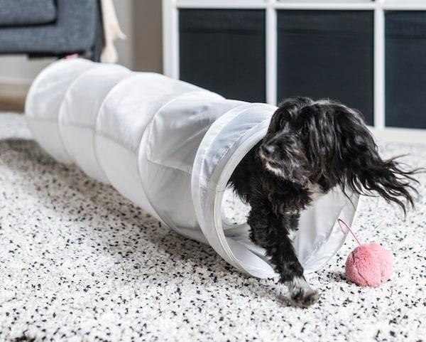 一只小黑狗从白色的长游乐隧道里出来,隧道末端吊着一只粉色玩具。