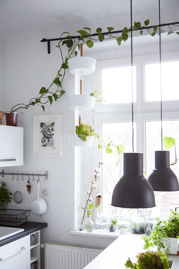 用植物替代窗帘来装饰窗户。