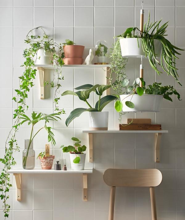 在白色瓷砖墙上,三块固定于不同高度的搁板和一个白色BITTERGURKA 比古卡 悬挂花盆摆满了绿植。