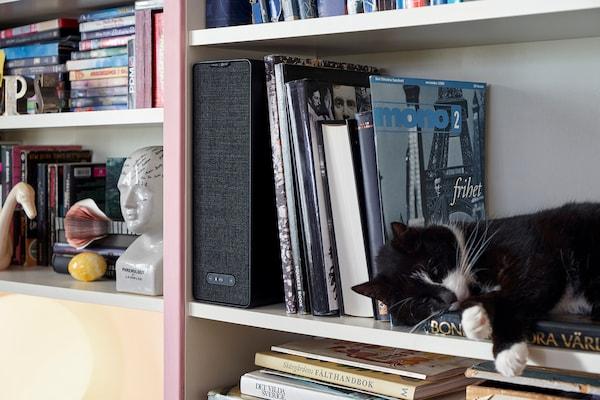 装满书籍的书架上摆放着 SYMFONISK 希姆弗斯 书架音箱。其中一个书架上,一只猫在卧着打盹。