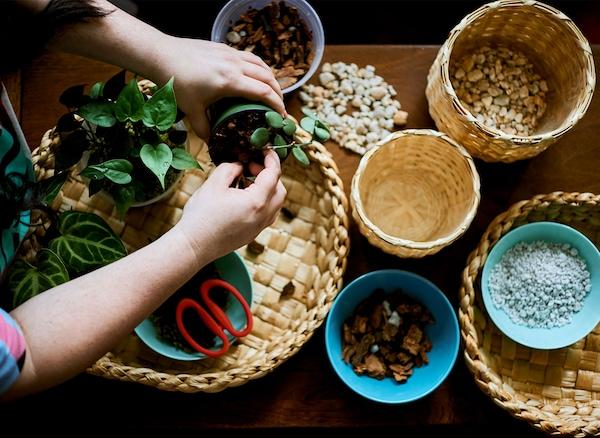 桌子上放着几个编织篮和几盆种植材料,一双手捧着一个护理盆。