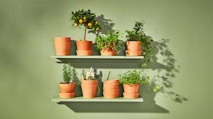 户外花盆和植物