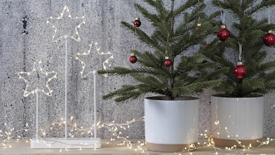 Holiday pots & plants